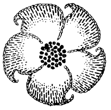 Small Picture Simple Flower Patterns Drawing