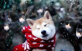 Cute Dog Christmas Wallpapers ...