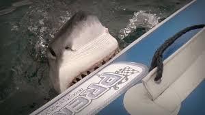 great white shark attacks boat.  Shark To Great White Shark Attacks Boat YouTube