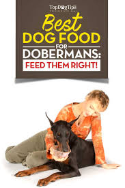 Best Dog Food For Dobermans 2018 What To Feed Doberman