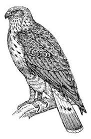 Small Picture Secretary bird other raptor coloring page For the kids