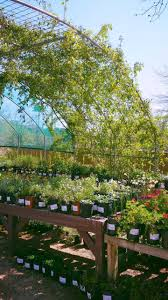 the beautiful gardens of the natural gardener in austin tx