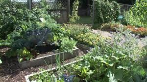 vegetable gardens for beginners guide