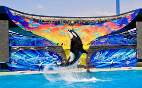 Here\u0027s Why SeaWorld\u0027s Plan for a New Orca Environment is Another ...