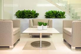 Brilliant Plant Interior Design For Decorating Home Ideas with Plant  Interior Design