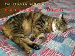 Katzeentspannungbett Grußkarten E Cards Postkarten Sprüche