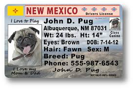 Mexico New New New Mexico Drivers License License New Mexico Drivers Drivers License