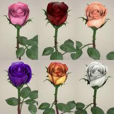 3d rose models renderhub
