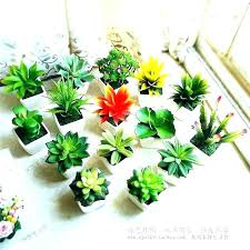 Small plant for office desk Stress Reliever Small Plant For Office Desk All Indoor Plants Office Desks New Flowering Low Light Small Plant Small Plant For Office Desk Referendumvetorechtpartijinfo Small Plant For Office Desk Table Small Plant Suitable For Office
