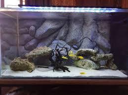 pin by srikanth ramanadham diy aquarium background