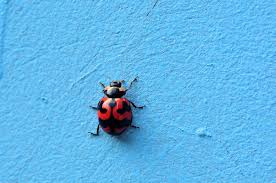 ladybugs and their importance to our