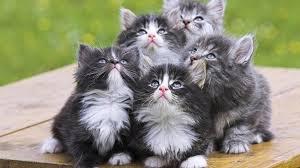 best cat wallpaper