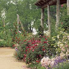 Small Picture Designing Great Combos with Your Favorite Plants Fine Gardening