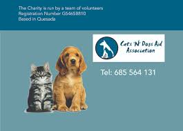 catsndogs cats n dogs aid association gran alacant advertiser  cats n dogs aid association gran alacant advertiser cats n dogs aid association formed in 2012