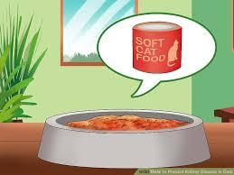 commercial cat food for kidney disease. Modren For Image Titled Prevent Kidney Disease In Cats Step 1 In Commercial Cat Food For