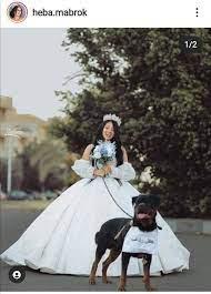 """ســــامــح on Twitter: """"فتاة مصرية تعلن زواجها من كلب نشرت هبة مبروك  البلوجر اللي كانت مرات عبدالرحمن مبروك، منذ قليل، صور ًا لحفل زفافها من  كلبها الخاص، وكتبت هبة مبروك، عبر صفحتها الشخصية: """"ضل كلب ولا ضل.. كملو  انتوا بقا"""" هتعملوا فينا إيه تاني هو إنتو ..."""