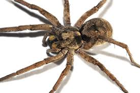 Spider Identification | Command Pest Control - Professionally ...