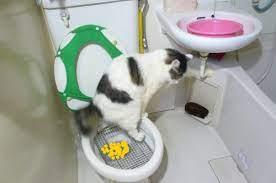 子猫 食べ 過ぎ