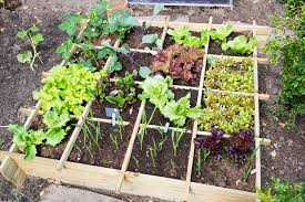 many gardeners like having a main vegetable garden area to concentrate their food production but it doesn t have to be all veggies