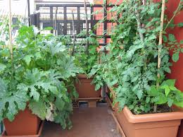Small Picture Being An Urban Gardener Creating A City Vegetable Garden