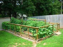 Small Picture Raised Bed Vegetable Gardengate and fence Attached right to beds