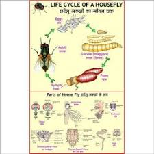 Beneficial Insects Chart Full Color Art Paper Laminated Beneficial Insects For