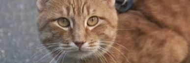 Cats — o filme 2019″ filmes.completo *dublado*. Cats 2019 Filme Completo Catflix Cat Cinema Catmosphere Ezhegodno Na Londonskoj Svalke Sobiraetsya Gruppa Koshek Iz Plemeni Izbrannyh So Vsego Mira
