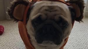 faze rug bosley logo. bosley the pug hot fap compilation faze rug dog sexy faze rug bosley logo