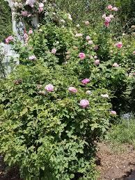 photo of los angeles county arboretum and botanic garden arcadia ca united states