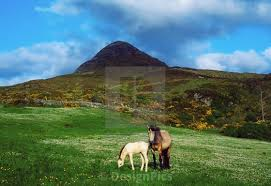 park county galway ireland horses