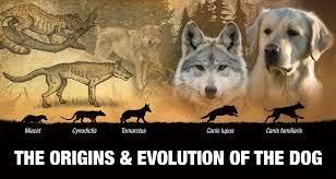 Canine Evolution Chart Origins Evolution Of The Dog Generation After Generation