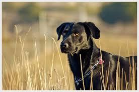 Resultado de imagen de perro espigas