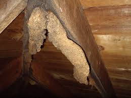 bat cave no but close bat urine stalactites in the roof rafters