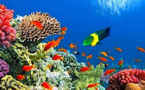 Amazing Aquarium Wallpapers Top Free Amazing Aquarium