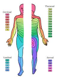 uitstraling been zonder rugpijn