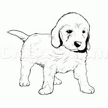 labradoodle animal coloring pages