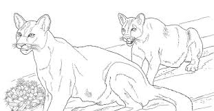 desert animals coloring pages mountain lion new mountain lion coloring page