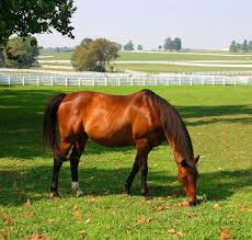 Kentucky Horse Park Seating Chart Kentucky Horse Park Wikipedia