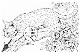 Small Picture Pictures Of Baby Cheetahs Coloring Home Coloring Coloring Pages