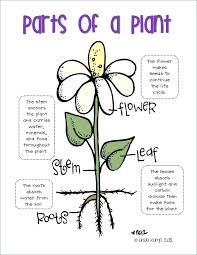 Plant Parts Worksheet Parts Of Plants Worksheet Parts Of A Plant ...