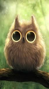 Cute Owl Wallpaper - HayPic