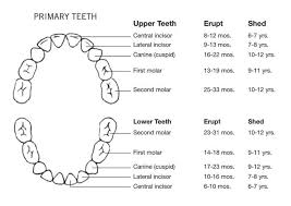 Children S Tooth Chart Letters Printable Baby Teeth Chart Templates Arrival Loss And Eruption
