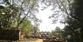 Image result for Desmatação para cultivar caju é grande problema na Guiné-Bissau