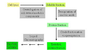 Protein Purification Chart 4 1 Protein Purification Biology Libretexts