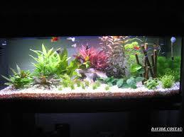 Guida al primo allestimento di un acquario tropicale