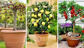 14 best fruits to grow in pots