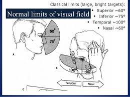 Visual Field Chart Interpretation Visual Field Chart Interpretation Www Bedowntowndaytona Com