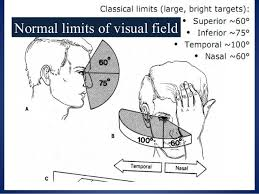 Visual Field Chart Interpretation Www Bedowntowndaytona Com