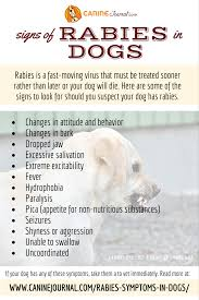 the signs of rabies in dogs dog infographics the o the signs of rabies in dogs