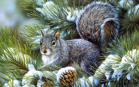winter animal nature backgrounds. Simple Nature Squirrels Animals Rodents Art Artistic Nature Wildlife Winter Snow 1920x1200 In Winter Animal Nature Backgrounds L